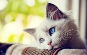 Top 10 Lợi ích của việc nuôi mèo cho sức khỏe