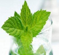 Top 10 Lợi ích tuyệt vời của lá bạc hà đối với sức khỏe