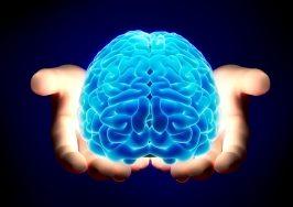 Top 10 Loại thực phẩm có hại cho não và trí thông minh của bạn