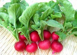 Top 11 Lợi ích của củ cải đường mang đến cho sức khỏe con người