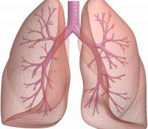 Top 12 Thực phẩm tốt nhất cho phổi bạn nên tham khảo
