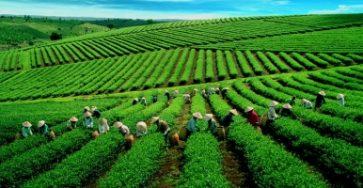 Top 6 Công dụng của trà xanh tốt cho sức khỏe có thể bạn muốn biết