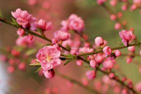 Top 6 Loài hoa Tết có độc bạn phải cẩn thận