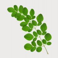 Top 7 Tác dụng tuyệt vời cho sức khỏe của cây chùm ngây