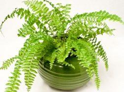 Top 9 Loại cây hút sóng bức xạ tốt nhất bạn nên trồng trong phòng